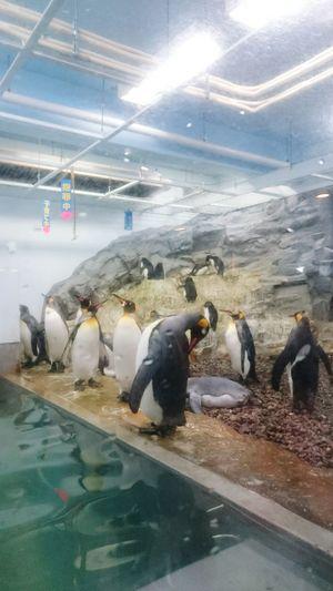 ぺんぎん 旭川 動物園