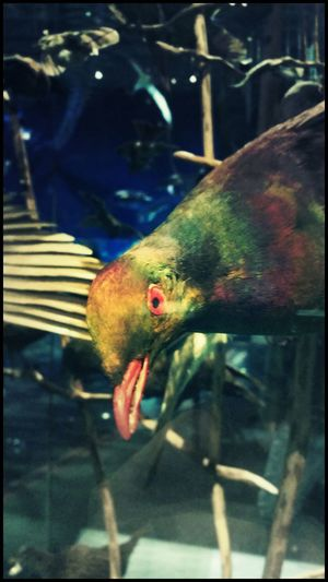 Native Birds Wood Pigeons At The Museum Exhibit  Check This Out Nature EyeEm Birds