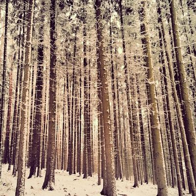 Forest Nature Tagsforlikes Wood snow winter walking czech instaphoto