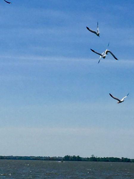 Flying Sky Animals In The Wild Animal Wildlife Water Animal Themes Animal