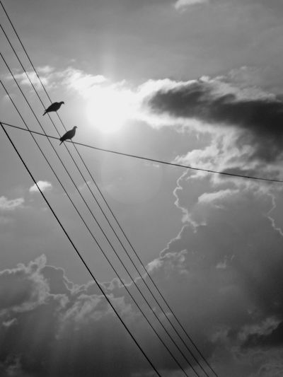 Birds Silhouette Black Sunlight Bnw Black And White Impressive Sky Low Angle View Two Birds Telephone Line Cable Electricity  Sky Cloud - Sky Power Line  Power Cable