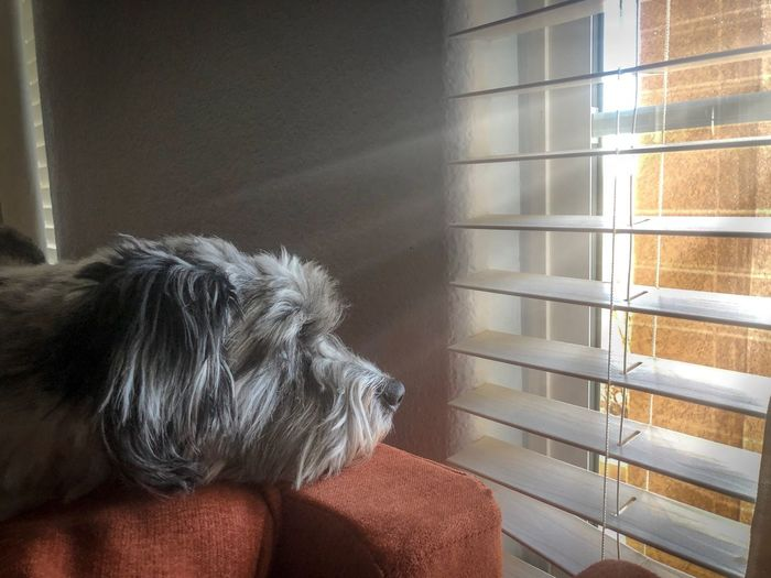 Mammal One Animal Domestic Animals Animal Themes Domestic Animal Pets Indoors  Window Canine Dog No People Home Interior Day Blinds Close-up Wall - Building Feature