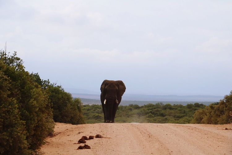 Rear view of elephant on landscape against sky