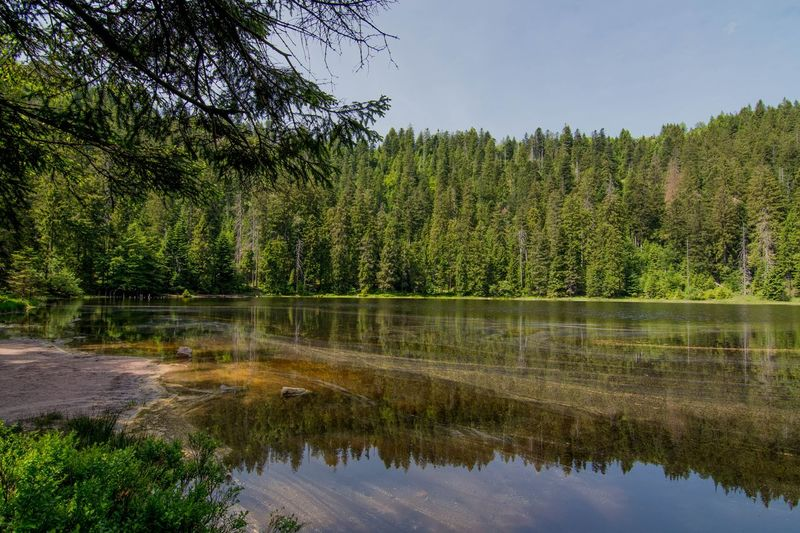 Wildsee Germany Beauty In Nature Coniferous Tree Day Forest Green Color Growth Lake Land Nature No People Non-urban Scene Outdoors Plant Reflection Reflection Lake Scenics - Nature Sky Tree Water Waterfront