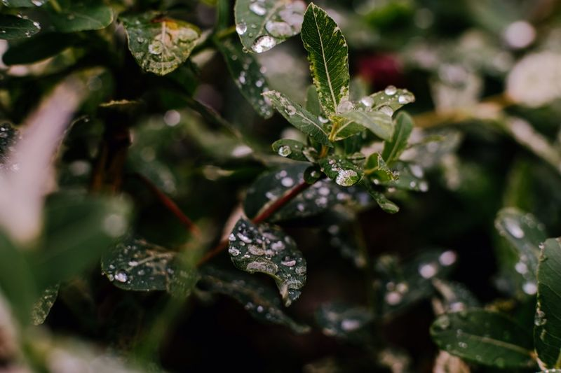 Wet plant Plant Close-up Beauty In Nature Nature Water Leaf Plant Part Wet No People Growth Drop Green Color Selective Focus Cold Temperature Day Outdoors Winter Focus On Foreground RainDrop Dew