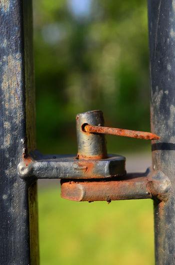 rusty nail Iron Steel Sharp Close Up Outdoor Rusty Close-up