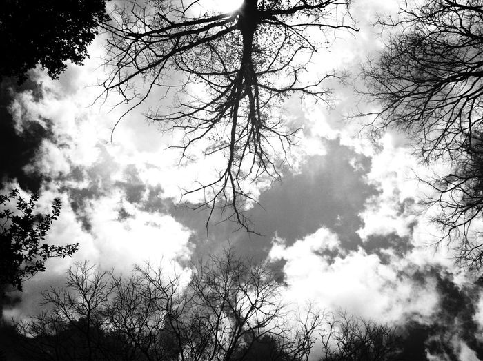 Sky And Trees Blackandwhite Photography Nordic Light Schattenspiel