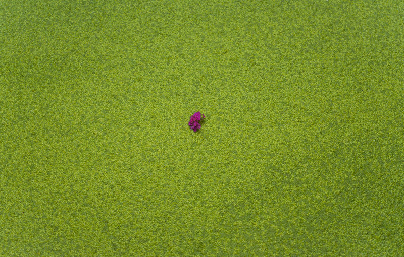 High angle view of flower on field