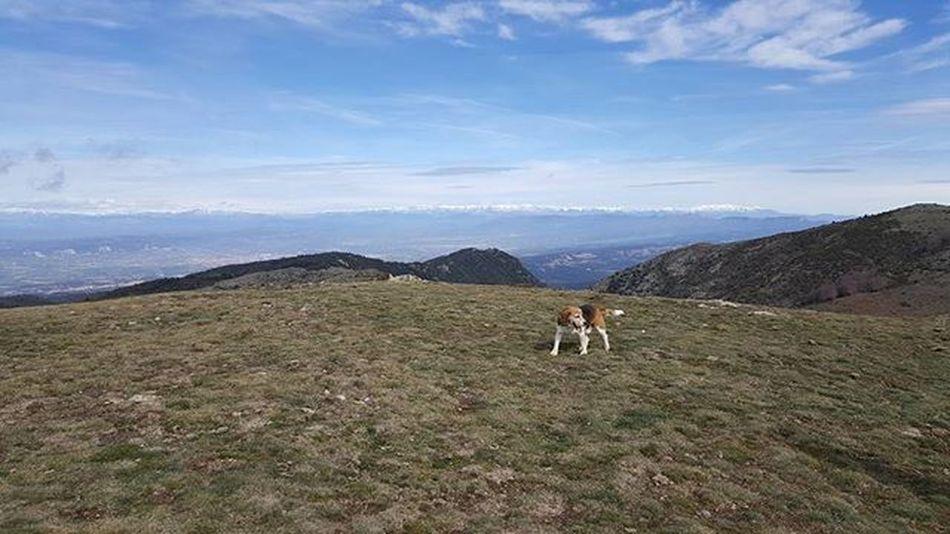 Nofilter Catalunyaexperience Matagalls Montseny Elbrull Viladrau Osona Vallesoriental Skyandclouds  Mountains Enjoylife Beagle