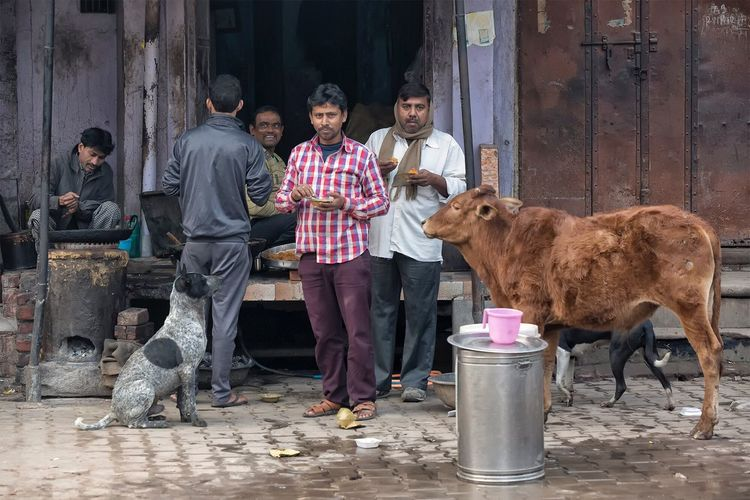 Street scene in Allahabad Uttar Pradesh. January 19, 2017. Real People Portrait Travel Photography Indian Incredible India EyeEm Best Shots - People + Portrait People Photography Streetphotography Documentary Street Photography Travel India Storytelling Check This Out Cultures People Market Occupation Small Business