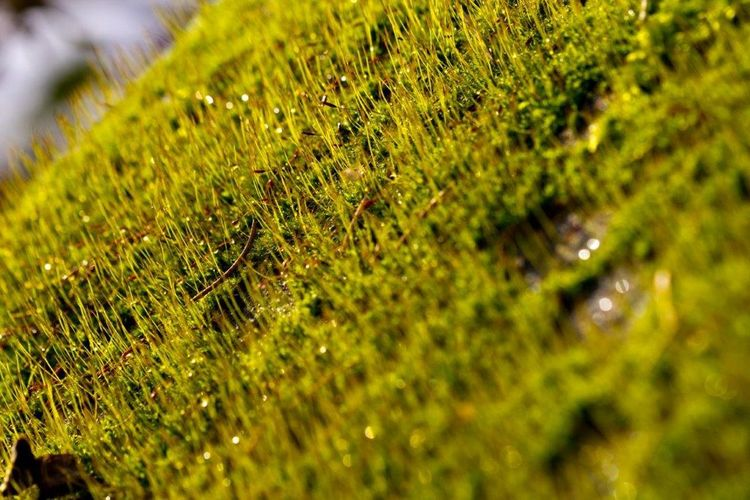 Close-up of moss on plant