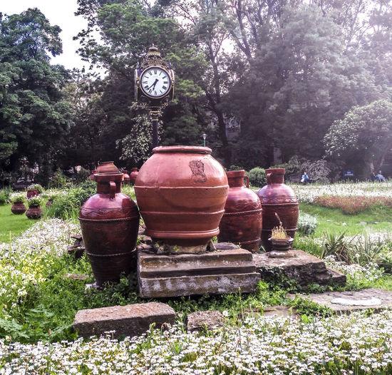 Clock Day Grass