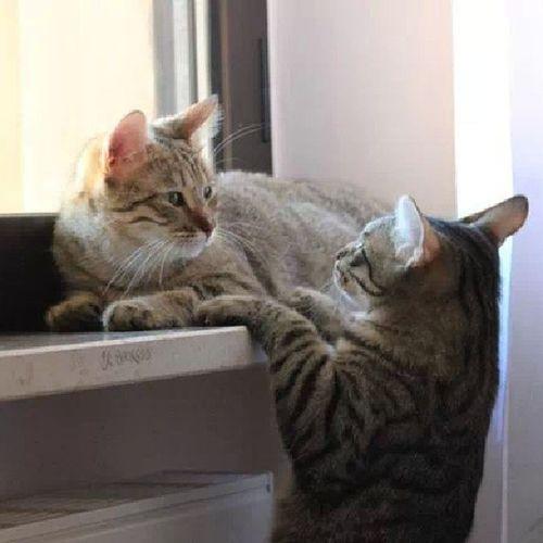 Cat Mio Milu Instaphoto picoftheday instapic instabruzzo photo instamiao animal love funny
