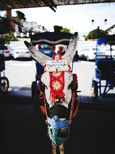 Number 15 Burrotaxi Donkey Donkeyride Mijas Close-up Multi Colored SPAIN Streetphotography Daily Life Hanging Parking