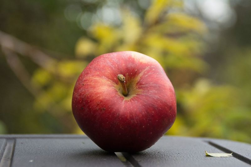 Close-up of apple