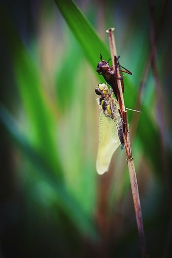 Full Length Insect Damselfly Close-up Animal Themes Plant Green Color Dragonfly Animal Wing Wildlife Perching