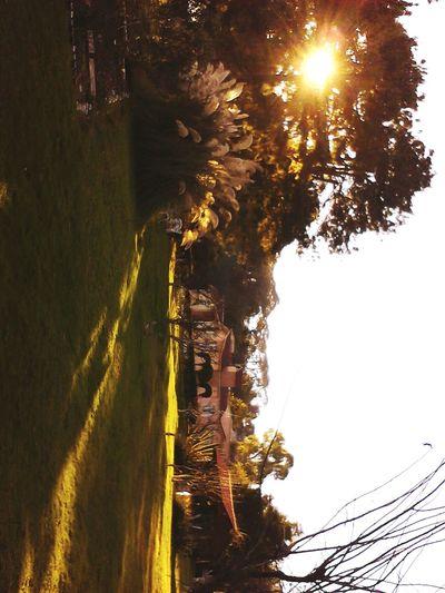 Relaxing Enjoying The Sun Camping CD de HIDALGO!!