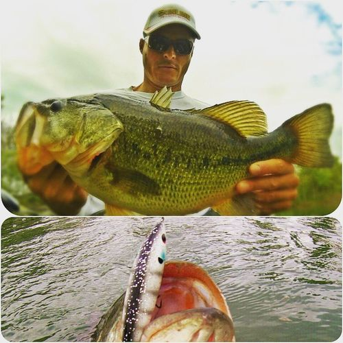 Topwater big bass attack my Pro Sizzle Jr by Livingstonlure . Great emotion and very cool moment! I love topwater time! Bassfishing Fishing BassfishingStyle Thewaterismystadium Bassbrigade Bigbassdreams Palmsrods Sunline Bigbass Topwater