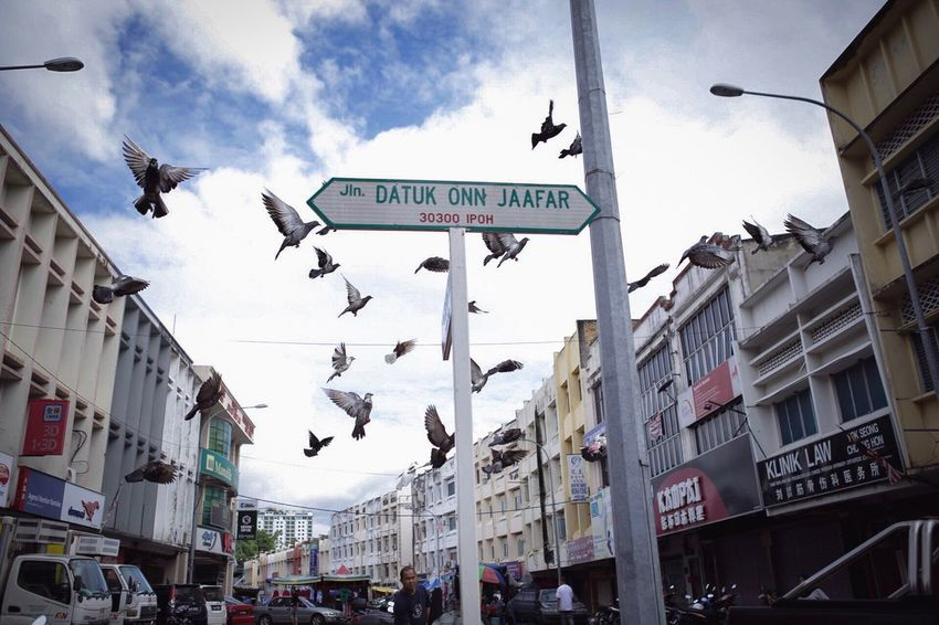 Building Exterior Flying Architecture Text Street Built Structure Bird City Road Sign Flock Of Birds Sky Low Angle View Outdoors Day Large Group Of Animals Animal Themes Spread Wings No People Ipoh Malaysia Malaysia Truly Asia Merpatiputih Merpati