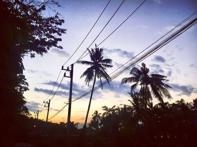 Yet another sunset ... a sight I will never tire of Sky Tree Low Angle View Palm Tree Sunset Cable Silhouette Power Line  Nature No People Power Supply Beauty In Nature Outdoors Cloud - Sky Thailand EyeEmBestPics Picoftheday Travel Photography Scenics EyeEm Best Shots Travel Destinations Krabi Thailand Ao Nang, Krabi. SeeTheWorldThroughMyEyes Landscape_Collection The Great Outdoors - 2017 EyeEm Awards Been There.