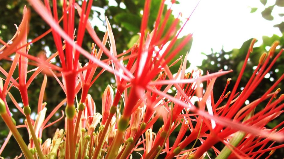Outdoor Outdoors Growth Red Plant Nature Blossom Closeup Hyderabad @sekharchinta