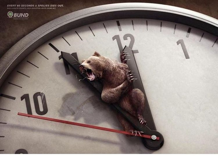 Endangered Species Bear Time To Dead