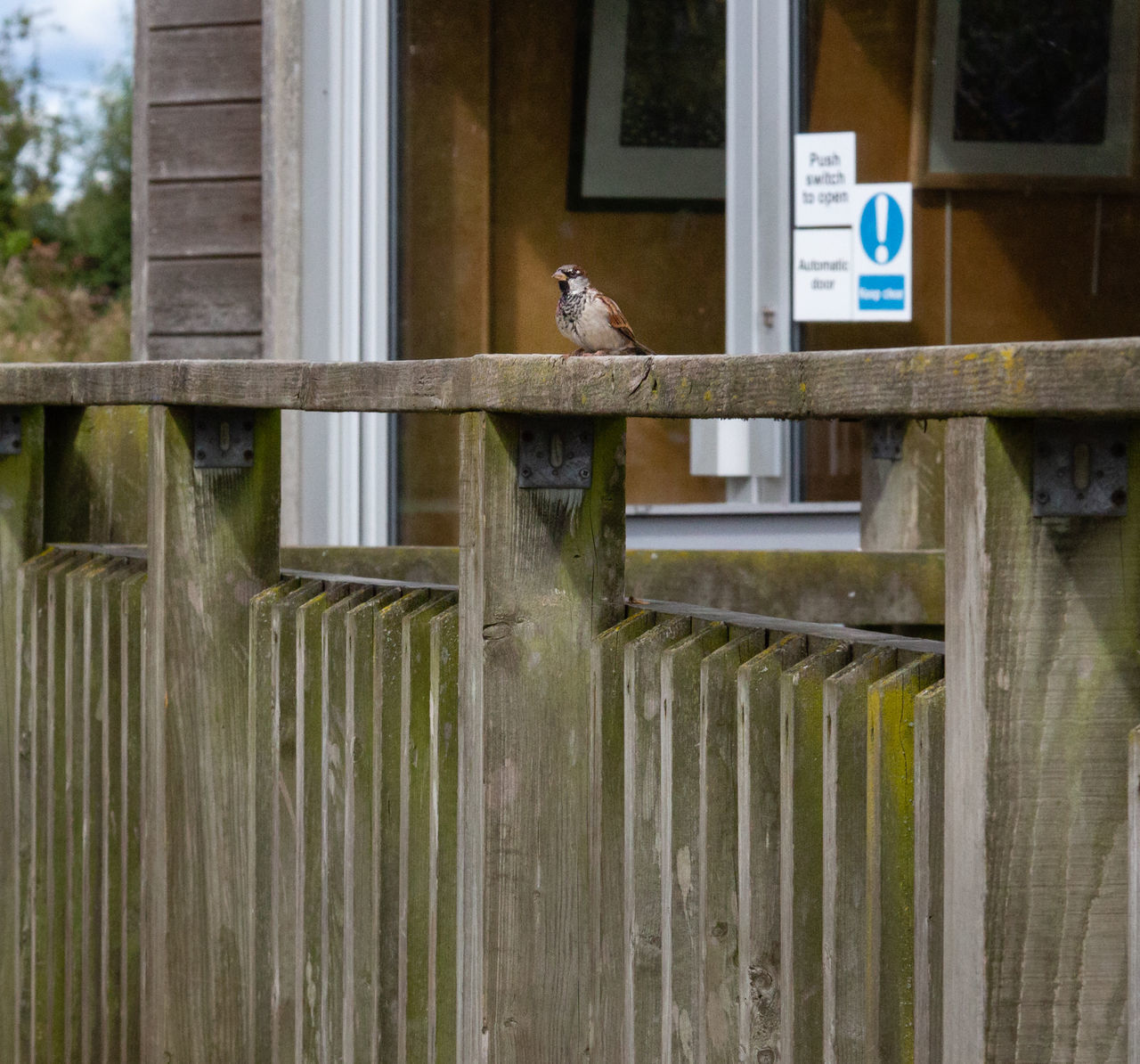 vertebrate, animal themes, animal, barrier, animal wildlife, fence, one animal, boundary, no people, day, bird, architecture, perching, wood - material, railing, built structure, security, protection, metal, animals in the wild, outdoors