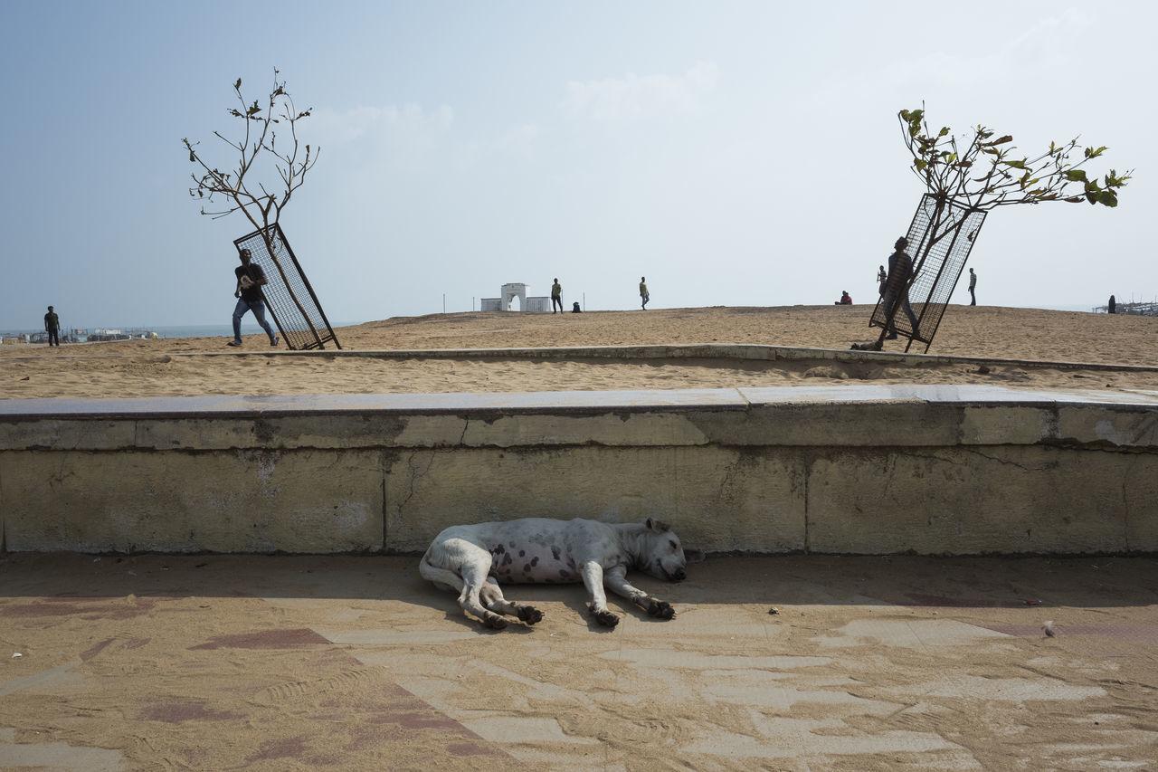Dog sleeping on road against sky