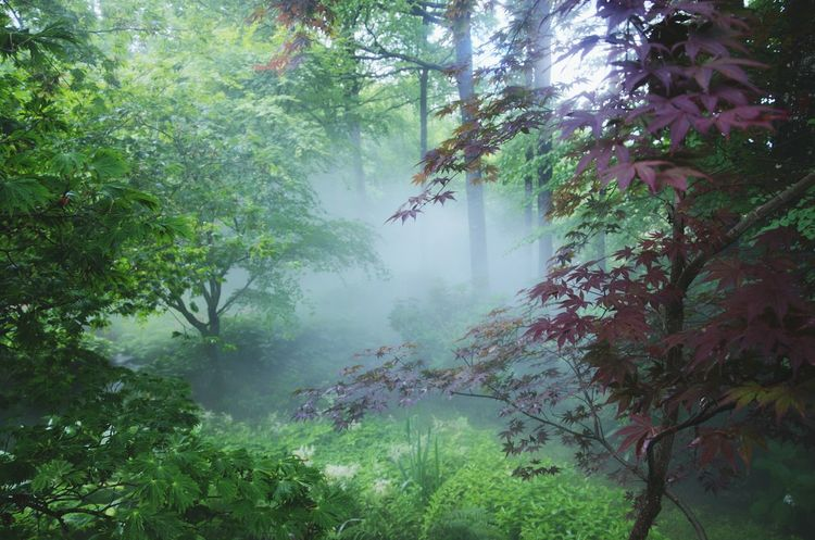 Fog in the forest /!\ I'm leaving for hollidays so I will not post photos during at least 1 month, so happy hollidays to all! /!\ Traveling Enjoying The View Beautiful Nature Let's Do It Chic! From My Point Of View Landscape_photography My Secret Garden Fog Forest Hanging Out