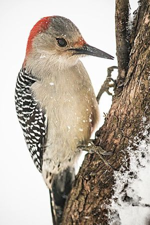 Wood pecker Woodpecker Birdseed Birdwatching Bird Watching Birds Of EyeEm  Bird Photography Nature Photography Nature Birds