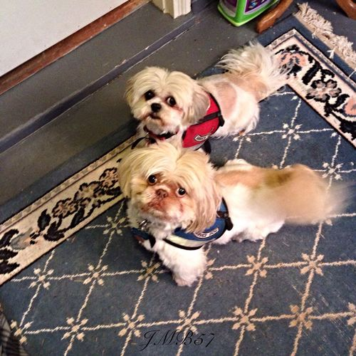 Gizmo and Dorie ready to Work💃. Streamzoofamily Friends TheVille Streamzoofriends Streamzoo Family StreamzooVille StreamzooCity Streamzoo Streamzooers StreamzooRefugee Streamzoofamily