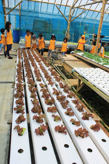 Hydroponic vegetables Agriculture Agriculture Photography Delicious Farming Freshness Green Healthy Food Hidroponics Hydroponic Vegetables Kids Learning Plant Seed