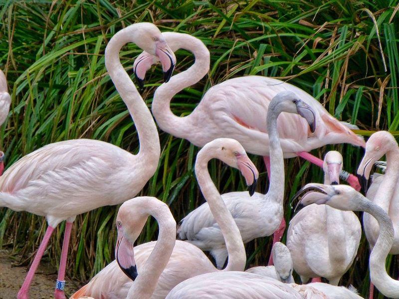 Bristol Bristol, England Bristol Zoo Zoo Flamingo Flamingos Flamingo At The Zoo Birds Bird Water Birds Water Bird Nature Nature_collection Wildlife Wildlife & Nature