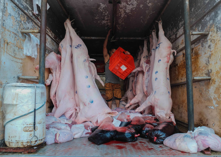 Person Standing Next To Dead Pigs In Butcher Shop