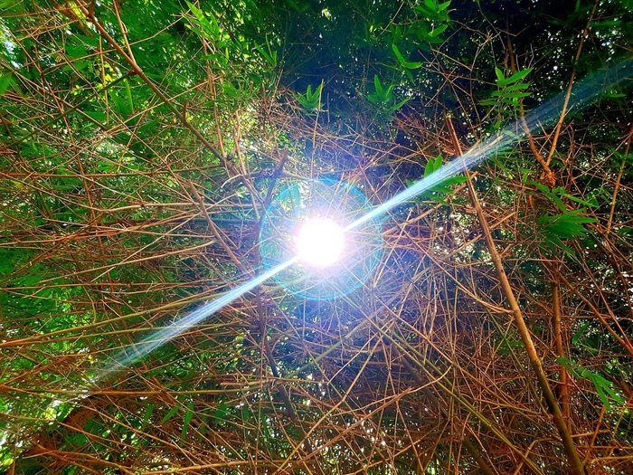 Sun beam Tree