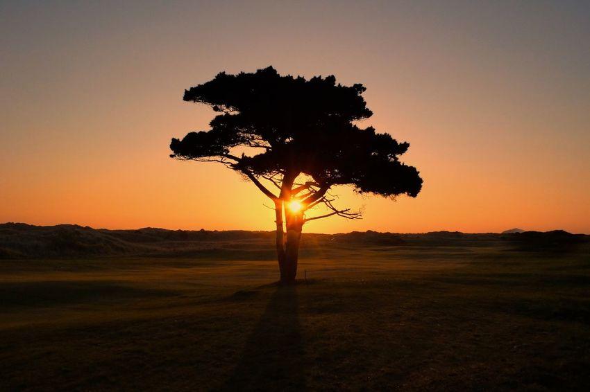 Tree Dublin Ireland Nature Sunrise Tree