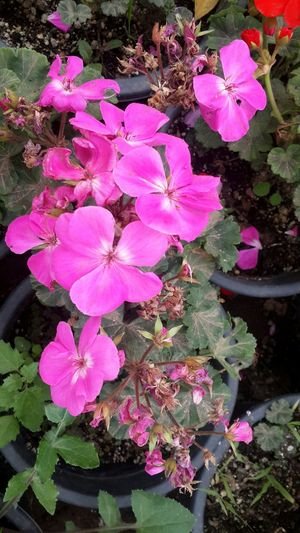 Nature Growth Flower Pink Color Outdoors Flower Head No People Day