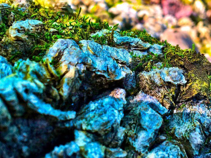 Moss Bark Macro