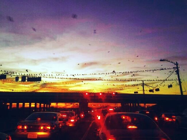 waiting at the light Sunset And Clouds  Escaping Nothing Birds