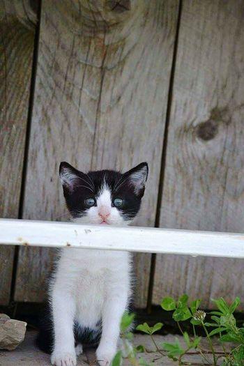 Cute Cats Cat♡ Black And White Slovakia Nature Animal Photo Verry Beautiful Cat Lovers I<3 You ňuňu!