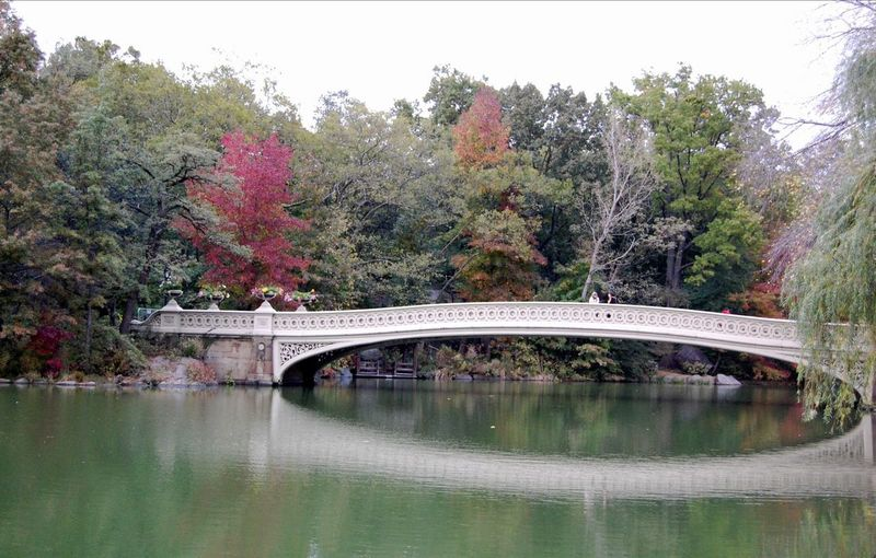 2011 Central Park in NYC Autumn Autumn Colors Bridge Day Fall Fall Colors Famous Place Forest Green Green Color Lush Foliage New York Outdoors Reflection Tree Water Water Reflections