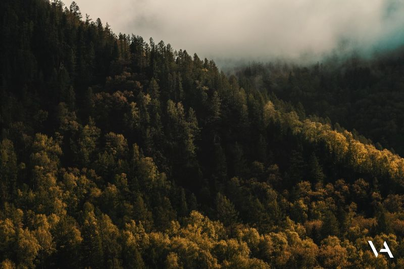 Лес в горах Tree Plant Growth Beauty In Nature Tranquility Sky Tranquil Scene Idyllic Green Color Coniferous Tree Non-urban Scene Low Angle View Land Outdoors Forest Scenics - Nature Cloud - Sky No People Nature Day