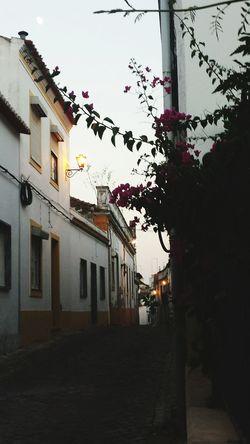 Portugal City Street Summer