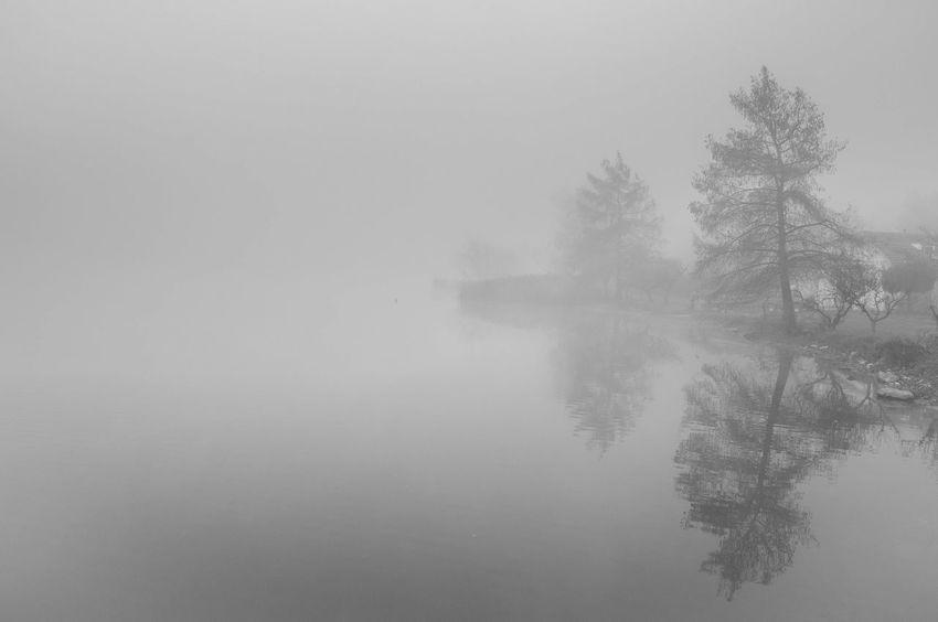 Alessandro Cappello Blackandwhite Fog Gavirate Hope Lake Landscape Mirror Mistery Nikond90 Nikonitalia Tree Varese Neighborhood Map