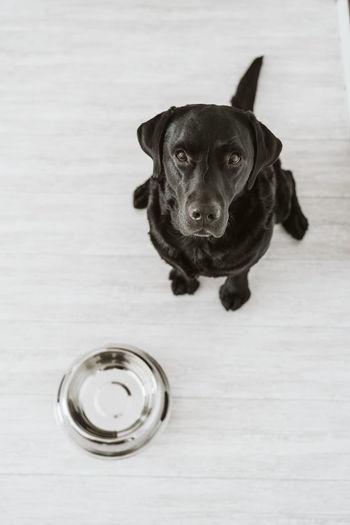 High angle portrait of black dog on table