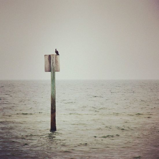 Lonely Bird Clearwater Beach Landscape Florida Nature P7taylor Epicearthco