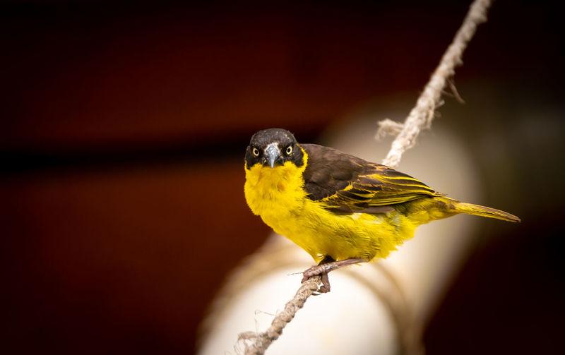 Close-up of bird perching on hand