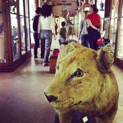 Ricercando il Capodoglio...incontriamo gli animali del Barone Franchetti #reggionarra #reggioemilia #museicivici #lifeisbeautiful #webstapic #instalife #igersreggioemilia