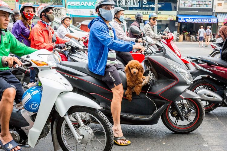 Traveling dogs (2) - Motorbikes in Vietnam (Ho Chi Minh City, VN, 2019) #Dog #Funny #Motorbike #Saigon #Traveling Mammal Real People Group Of People Large Group Of People Transportation One Animal Men Mode Of Transportation Pets Domestic Animals Canine Crowd Dog Domestic Adult Women Street