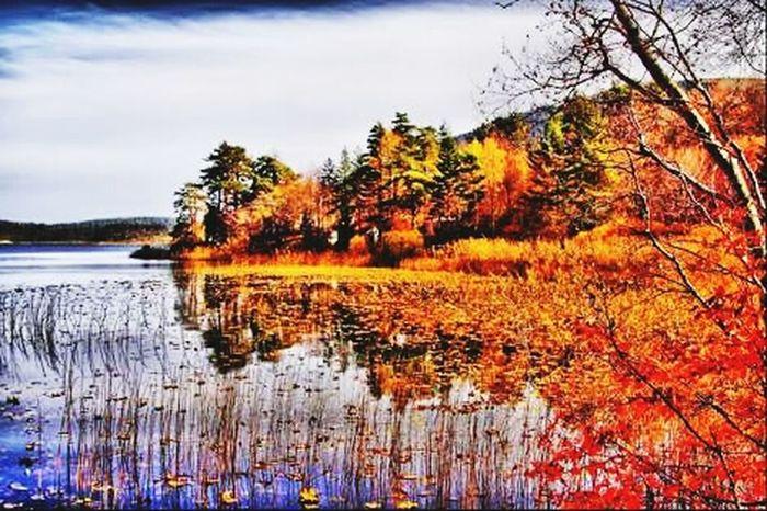 Turkey Bolu  Abantgölü Dogalhayat Göl Mevsim Sonbahar Yaprak Fotography Huzur